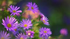 (marussia1205) Tags: цветы ромашки сиреневый lilac daisy flowers