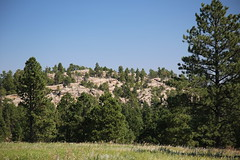 AU3A6529 (MegachromeImages) Tags: sd south dakota pigtail loop black hills mount rushmore granite rock formation forest ponderosa pine mineral alpine custer state park buffalo