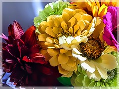 Red, Yellow, White, Green and Pink! (Marcia Portess-Thanks for a million+ views.) Tags: multicolor painted closeup computerart elartedigital digitalart elarte art photomanipulation multimedia petals zinnias bouquet blossoms colourful color colour fleur flores flowers marciaportess marciaaportess map pink green white yellow red