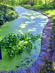 When the green LAKE spills... (Ladyhelen_) Tags: green lake city garden colors greencolor walker colorful lagoon greengarden natureinthecity mycity relax relaxing