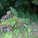 restos de troncos invadidos por plantas vivas