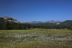 AU3A6528 (MegachromeImages) Tags: sd south dakota pigtail loop black hills mount rushmore granite rock formation forest ponderosa pine mineral alpine custer state park buffalo