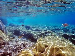 Underwater life (Dumby) Tags: underwater agisidoros greece lesbos hellas nature colors fish aegean