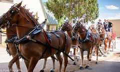 New York State Fair 2019 (Al Fontaine) Tags: horses teamofhorses horsedrawnwagon competion newyorkstate fair 2019