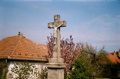(szmenazsófi) Tags: smena analog analogue film smenasymbol lomo outdoor nature landscape hollókő cserhát kéktúra magyarország hungary országoskéktúra blossoms bloom spring cross crucifix