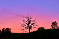 Harmating dead tree (Claude@Munich) Tags: germany bavaria upperbavaria egling dietramszell harmating tree deadtree evening sky claudemunich bayern oberbayern baum toterbaum abendstimmung abends himmel abendhimmel