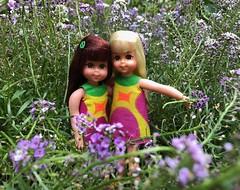 In the alyssum field (Foxy Belle) Tags: chris tutti mod doll vintage barbie kids 1960s