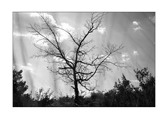 nature mort (Armin Fuchs) Tags: arminfuchs nomansland tree silhouette sky clouds niftyfifty grass naturallayer