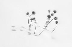 Winter Bouquet (sjsweeney130) Tags: