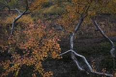 08092019-_DSF6150 (lebeaupinagnes) Tags: agneslebeaupin lebeaupinagnes north iceland islande fall automne stream life daily fil leau water colours nature form