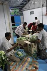 Cambodia-dawson-01 (308) (Horticulture Innovation Lab) Tags: cambodia photobybrendadawson royaluniversityofagriculture ucdavis legrand packinghouse postharvest sorting