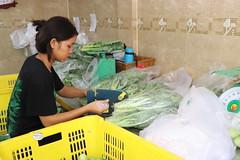 Cambodia-dawson-02 (425) (Horticulture Innovation Lab) Tags: cambodia ucdavis royaluniversityofagriculture phnompenh photobybrendadawson remic packing