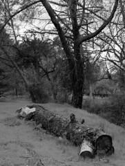 Same Ol' Stuff (patking84) Tags: kodak portra 400 pentax 645n landscape california film