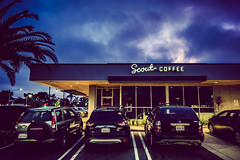 scout coffee [Day 3905]