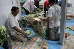 Cambodia-dawson-01 (311) (Horticulture Innovation Lab) Tags: cambodia photobybrendadawson royaluniversityofagriculture ucdavis legrand packinghouse postharvest sorting