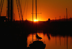 A Northern California sunrise (Robin Wechsler) Tags: sunrise water boats canal sanrafaelcanal weather silhouette landscape