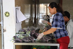 Cambodia-dawson-02 (492) (Horticulture Innovation Lab) Tags: cambodia ucdavis royaluniversityofagriculture phnompenh photobybrendadawson remic packing