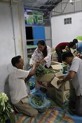 Cambodia-dawson-01 (316) (Horticulture Innovation Lab) Tags: cambodia photobybrendadawson royaluniversityofagriculture ucdavis legrand packinghouse postharvest sorting