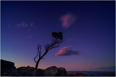 Tree at the edge of Night (niggyl (getting there)) Tags: wideangle ultrawideangle wideangleprimes primelens larapuna binalongbay bayoffires eastcoasttasmania sthelens seascape landscape ocean waves beach sky cloud sea allocasuarinaverticillata sheoak devoniangranite cloudsstormssunsetssunrises cloudporn firststars bluehour breathtakinglandscapes dxolabs nikcollection colorefexpro4 colorefexpro sonyilce7rm2 sony sonya7rii sonyalpha7 a7rii sonyemount zeiss zeissbatis2818 zeissbatis1828 zeisslens zeissemount batis batis18mm batis2818 longexposure ndfilter breakthroughfilters breakthroughphotography breakthroughx4 breakthroughphotographyx46stopndfilter