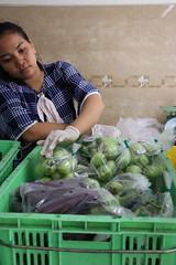 Cambodia-dawson-02 (531) (Horticulture Innovation Lab) Tags: cambodia ucdavis royaluniversityofagriculture phnompenh photobybrendadawson remic packing eggplant