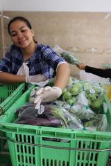 Cambodia-dawson-02 (542) (Horticulture Innovation Lab) Tags: cambodia ucdavis royaluniversityofagriculture phnompenh photobybrendadawson remic packing eggplant
