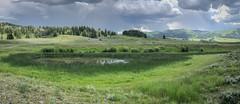 Yellowstone Wetland (petechar) Tags: charlesrpeterson petechar landscape wetland palustrine sloughcreekarea yellowstonenationalpark wyoming appleiphonex