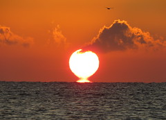 IMG_0021x (gzammarchi) Tags: italia paesaggio natura mare ravenna lidoadriano alba sole nuvola animale uccello volo poesia haiku