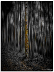 The woods (peterwilson71) Tags: abandoned autumn canon6d dark exposure evening foliage grass light leaves motion movement nature outdoors rocks travel trees