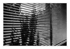 Dreams of Stripes and more ... (Thomas Listl) Tags: thomaslistl blackandwhite biancoenegro noiretblanc stripes shadow light contrast window lines diagonal graphical geometry veranda véranda av af nml nomansland indoor pattern