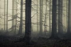 Dark Forest (Netsrak) Tags: baum bäume eu eifel europa europe forst landschaft natur nebel rheinland rhineland wald fog forest landscape mist nature outdoor trees winter woods