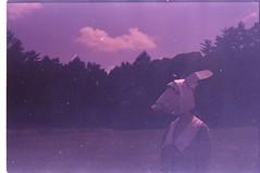 (✞bens▲n) Tags: contax g2 fujichrome 100 carl zeiss 45mm f2 film xpro crossprocessed japan nozomi hoshikawa rabbit mask cloud