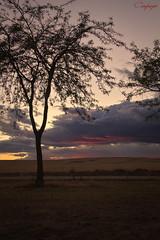 Lonely day...252/365 (cienfuegos84) Tags: sunset atardecer polvoranca arbol silueta clouds nubes