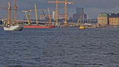 Boats, barges, cranes... and a grey seal in the city centre! This is Stockholm. (Franz Airiman) Tags: halichoerusgrypus säl seal sälis sälx grayseal greyseal animal djur stockholm sweden scandinavia wild vild vattendjur mammal watermammal däggdjur vattendäggdjur gråsäl strömmen stockholmsström