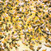 Idaho Bees