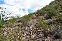 20190910 William R. Gleason stone quarry Road (1880 - 1885) on Sentinel Peak (lasertrimman) Tags: stone peak william r gleason quarry sentinel 1880 1885 stonequarry sentinelpeak 18801885 20190910 williamrgleason road