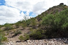 20190910 William R. Gleason stone quarry Road (1880 - 1885) on Sentinel Peak (lasertrimman) Tags: stone william r gleason quarry 1880 1885 20190910 peak sentinel stonequarry sentinelpeak 18801885 williamrgleason road