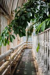 (Coral G. Granda) Tags: londres kewgardens london botanical botanic botanico jardin jardinbotanico royalgardens green verde nature