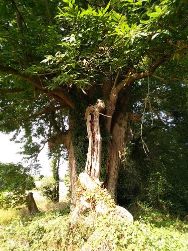 Balade Gourmande La Forêt de Tessé