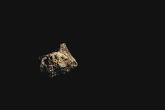 _MG_3611 (waychen_c) Tags: mineral gold au nativegold 礦物 礦石 金 自然金 金礦