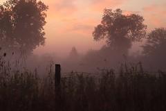 Last night's storms; this morning's fog. (Steve InMichigan) Tags: sunriseglow morningdew morningfog canoneosm50 yashicaml50mmf20lens fotgacyeosmlensadapter