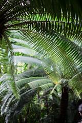 (Coral G. Granda) Tags: londres kewgardens london botanical botanic botanico jardin jardinbotanico royalgardens green verde nature palm palmera palmeras