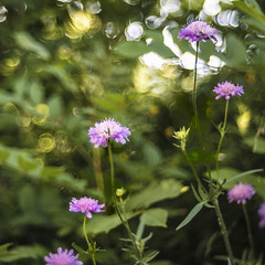 helios 44-4 #8 (Roberto Defilippi) Tags: 2019 332019 rodeos robertodefilippi helios44 bokeh tmpanel handheld fiore flowers