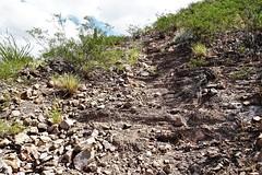 20190910 William R. Gleason stone quarry Road (1880 - 1885) on Sentinel Peak (lasertrimman) Tags: stone william r gleason 1880 1885 20190910 peak quarry sentinel stonequarry sentinelpeak 18801885 williamrgleason road