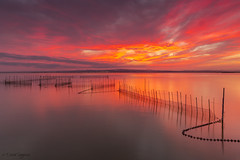 Albufera Colors. (dasanes77) Tags: canonef1635mmf4lisusm canoneos6d tripod landscape seascape cloudscape clouds red sunset sun reflections shadows nets water lake calm peace silence lines albuferaofvalencia valencia