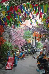 A Colourful Alley (peterkelly) Tags: digital canon 6d asia southeastasia gadventures indochinaencompassed vietnam hanoi scooter motorbike motorcycle street alley flags flowering trees tree flowers banners slide