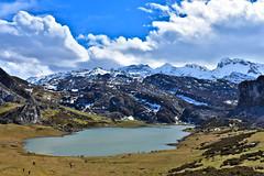 Lago de la Ercina, Covadonga (diegocarreraperez) Tags: covadonga lago lake enol ercina mountain montaña nature naturaleza asturias asturies norte north spain españa europa europe agua water verde green nieve snow cielo sky nube cloud wild salvaje picos cantábrico