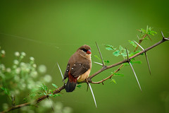 Bird on Branch (sahulalit) Tags: wildlife animals wild bird perching vertebrate plant nature green color day tree outdoors branch foreground leaf