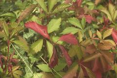 M0002257 (amansjeanphilippe) Tags: amansjeanphilippe leica thambar 90f22 n°226442 1934 f63