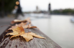 Leafs by the Thames in London (Martyn.Hayes) Tags: autumn fall leaf leaves wildlife uk britain england season seasonal brownleaf deadleaf deadleaves london weather yellow red brown park big ben thames river water sky bokeh lights pathway fence colours