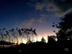 Las últimas luces del día, en una caminata/ The last lights of a day, on a hike (vantcj1) Tags: atardecer anochecer celaje cielo nubes árboles bosque cultivos arbustos vegetación naturaleza campo rural caminata coníferas valle montañas